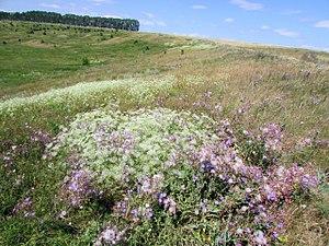 Batyrevsky District - Nature reserve in Batyrevsky District