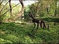 Ботанический сад (Петровский огород) - panoramio (2).jpg