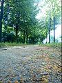 Вулiца Міжгародняя - panoramio.jpg