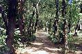 В лесу - panoramio (6).jpg