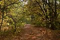 Дорога, засыпанная листвой - panoramio.jpg