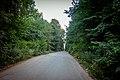 Дорога через осташківський ліс.jpg