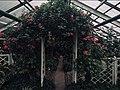 Забайкальский ботанический сад (дорожка).jpg