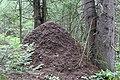 Заварзинский муравейник.jpg