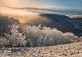 Зима в заказнике Брык.jpg