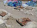 """Керч.Архітектурно-археологічний комплекс «Стародавнє місто Пантікапей"""".Знайдені речі.jpg"""