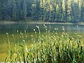 Національний природний парк «Синевир», 9.jpg