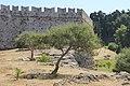 Перцовое дерево. Родосская крепость. Rhodos. Greece. Июнь 2014 - panoramio.jpg