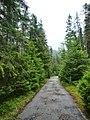 Пътя от хижа Вада - panoramio.jpg