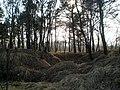 У лесе - panoramio (1).jpg