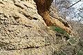 У реки - panoramio (6).jpg