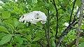 Череп лисы на дереве.jpg