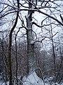 Чернечий Ліс 16.jpg