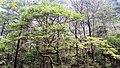Чжанцзяцзе - panoramio (7).jpg