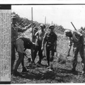 המאורעות בארץ ישראל 1938 - בגבול הסורי-לבנוני הקמת חומת טגארט-PHL-1088130.png