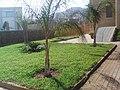 حديقة مقر البلدية الجديد - panoramio.jpg