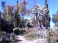 غابة جميلة بمدينة عين تموشنت.jpg