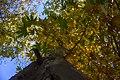 پاییزدر ایران-قاهان قم-Autumn in iran-qom 01.jpg