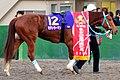 「第39回東京2歳優駿牝馬」の優勝レイを着装した勝利馬モダンウーマン.JPG