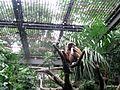 上野動物公園, Ueno Zoo(Ueno Zoological Gardens) - panoramio (1).jpg