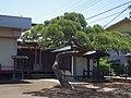 八雲神社の松の木 川崎市多摩区にて 2013.5.17 - panoramio.jpg