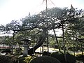 兼六園 - panoramio (2).jpg