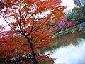 小石川植物園(2009.11.28撮影) - panoramio.jpg