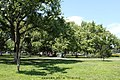 广场西南角树林 - panoramio.jpg