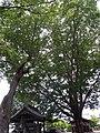 松本神社 - panoramio (1).jpg