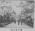 桜馬場公園.jpg