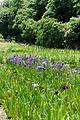 神代植物公園 水生植物園 - panoramio.jpg