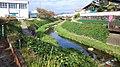 糸貫川のコスモス - panoramio.jpg