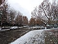 雪天的潍坊学院 2020-12-13 1.jpg