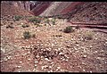 014 Grand Canyon Burro Damage 1975 (4952171986).jpg