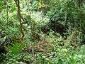 102 Tayrona Park Hike Foliage.JPG
