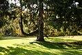131103 Hokkaido University Botanical Gardens Sapporo Hokkaido Japan43o.jpg