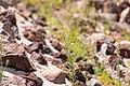 15-07-13-Teotihuacan-RalfR-WMA 0164.jpg