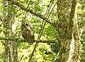 1b Owl (7518585260).jpg