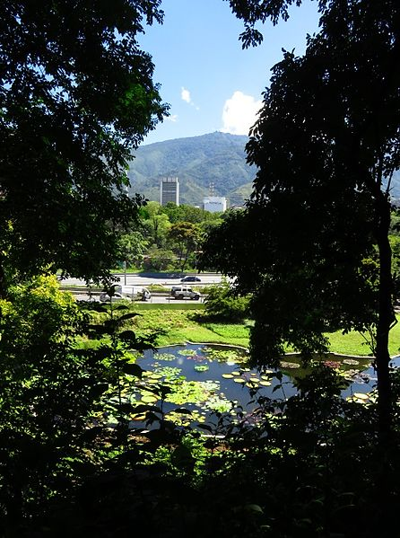 File 2 laguna venezuela jard n botanico de la ucv caracas for Lagunas de jardin
