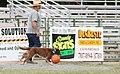 2007 Mendocino County Fair & Apple Show 29.jpg