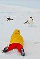 2007 Snow-Hill-Island Luyten-De-Hauwere-Emperor-Penguin-47.jpg