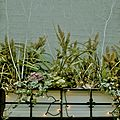 2008 flowerbox 2355999518.jpg