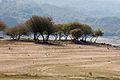 2011-10-15. Aquis Querquennis - Galiza - AQ38.jpg