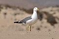 2012-01-18 13-41-21 Spain Canarias Jandía.jpg