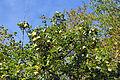 2012-10-06 Landshut 075 Burg Trausnitz (8062459392).jpg