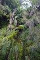 2012-10-26 15-32-34 Pentax JH (49283384306).jpg
