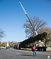 2014 Capitol Christmas Tree Arrival (15683224739).jpg