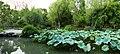 2015-09-24-121330 - Suzhou, Garten des bescheidenen Beamten.jpg