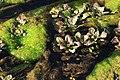 2016.05.28 08.53.48 IMG 6017 - Flickr - andrey zharkikh.jpg