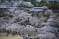 20160403 Himeji-Castle 3350 (26732265702).jpg